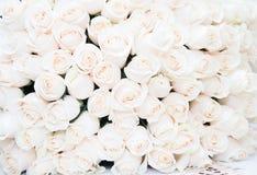 Witte rozenachtergrond Luxeboeket Royalty-vrije Stock Afbeelding
