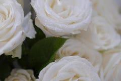 Witte rozenbloemen Stock Afbeelding