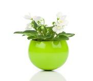 Witte Saintpaulia-bloemen Royalty-vrije Stock Afbeeldingen