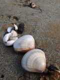 Witte Shell Beach royalty-vrije stock afbeeldingen