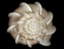 Witte slakshell met treden op zwarte bodem royalty-vrije stock afbeelding