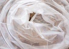 Witte sluier. Stock Afbeelding