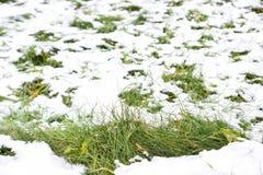 Witte sneeuw op groen gras Stock Foto's