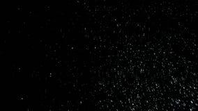 Witte sneeuw op zwarte achtergronddalingen en roezen stock videobeelden
