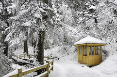 Witte sneeuwcabine in pijnboombos Royalty-vrije Stock Fotografie