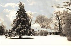 Witte Sparren met Wolken Stock Foto's