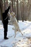 Witte springende herder met meester Royalty-vrije Stock Foto's