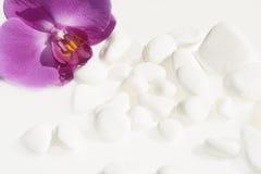 Witte stenen en orchidee Stock Afbeelding