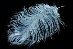 Witte struisvogelveer royalty-vrije stock foto's