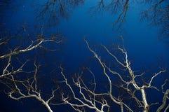 Witte tak in blauwe hemel Stock Foto's