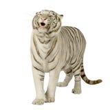 Witte Tijger (3 jaar) Royalty-vrije Stock Fotografie