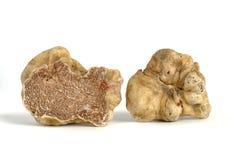 Witte truffel Stock Fotografie
