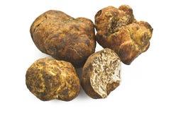 Witte truffel Royalty-vrije Stock Fotografie