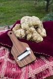 Witte truffels van Piemonte Stock Afbeelding