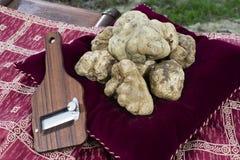 Witte truffels van Piemonte Stock Foto's