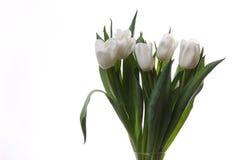 Witte tulpen. Stock Foto's