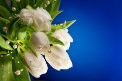 Witte tulpen op een blauwe achtergrond Stock Afbeeldingen