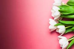 Witte tulpen op gradiënt roze achtergrond met exemplaarruimte royalty-vrije stock foto