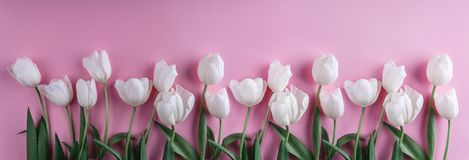 Witte tulpenbloemen over lichtrose achtergrond Groetkaart of huwelijksuitnodiging stock afbeeldingen
