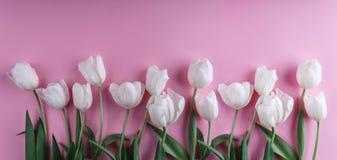 Witte tulpenbloemen over lichtrose achtergrond Groetkaart of huwelijksuitnodiging stock afbeelding