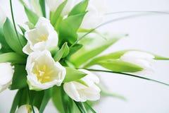 Witte tulpenbos royalty-vrije stock fotografie
