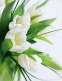Witte tulpenmacro stock foto's