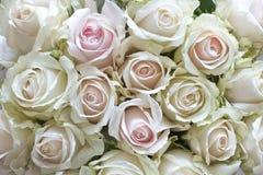 Witte Uitstekende Rozen Stock Foto