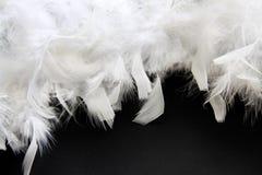 Witte veer Stock Foto's