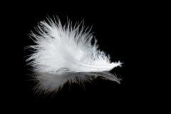 Witte veer Royalty-vrije Stock Foto