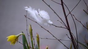Witte veren Stock Foto
