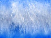 Witte veren en benedenclose-up Stock Foto