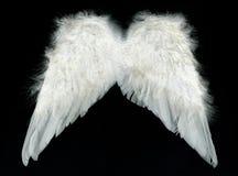Witte vleugels Royalty-vrije Stock Foto's