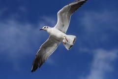 Witte Vogel royalty-vrije stock afbeelding