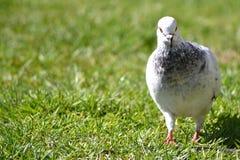 Witte vogel Stock Foto's
