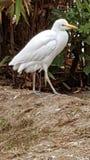 Witte Vogel royalty-vrije stock fotografie