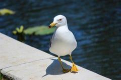 Witte vogel dichtbij een meer Royalty-vrije Stock Afbeeldingen