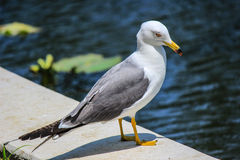 Witte vogel dichtbij een vijver Royalty-vrije Stock Afbeeldingen
