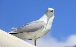 Witte vogel status Royalty-vrije Stock Foto's