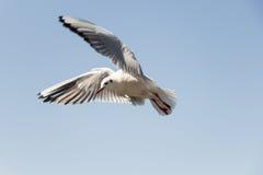 Witte vogelzeemeeuw Royalty-vrije Stock Foto's
