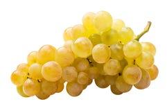 Witte volledig geïsoleerdeo druif (riesling) Royalty-vrije Stock Foto's