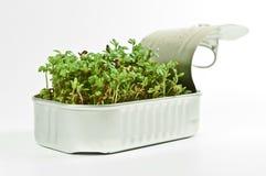 Witte waterkers in een tinblik Royalty-vrije Stock Fotografie