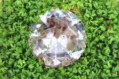 Witte waterkers en diamant Stock Afbeeldingen