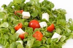 Witte waterkers en Tomatensalade stock afbeelding