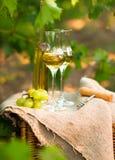 Witte wijnfles, glas, jonge wijnstok en bos van druiven tegen Stock Afbeeldingen