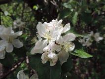 Witte Wildflower royalty-vrije stock foto's