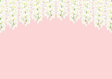 Witte Wisteria die op Roze Achtergrond met exemplaarruimte wordt geïsoleerd Vector illustratie Royalty-vrije Stock Fotografie