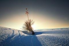 Witte woestijn Stock Foto's
