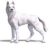 Witte Wolf. het 3D teruggeven met het knippen van weg en stock illustratie
