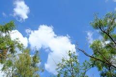 Witte wolk omringde bomen tegen een mooie duidelijke hemel Stock Foto