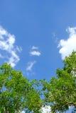 Witte wolk omringde bomen tegen een mooie duidelijke hemel Royalty-vrije Stock Foto